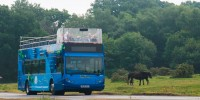 New Forest Tour returns for the summer
